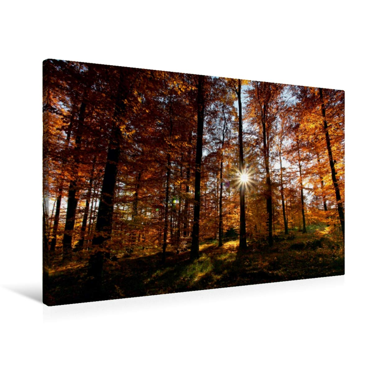 Premium Textil-Leinwand 90 cm x 60 cm quer Herbstwald