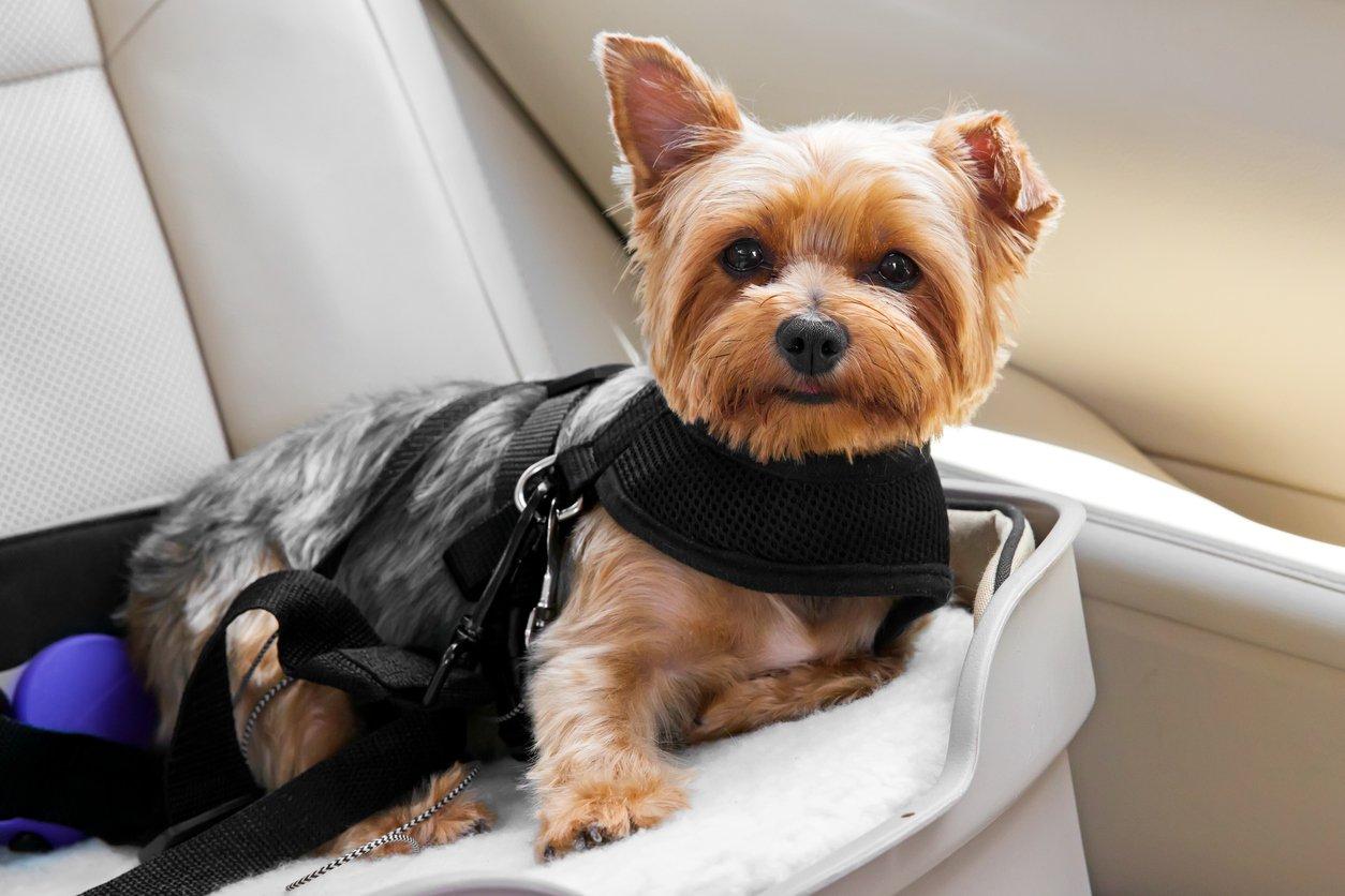 Pets-N-Stuff Doggy Car Headrest Restraint - Animal Safety Seat Belt Strap - Adjustable Nylon Fabric Harness Dog – Easy Vehicle Travel Pet – Durable Zipline & Tether Backseat Traveling (pink)