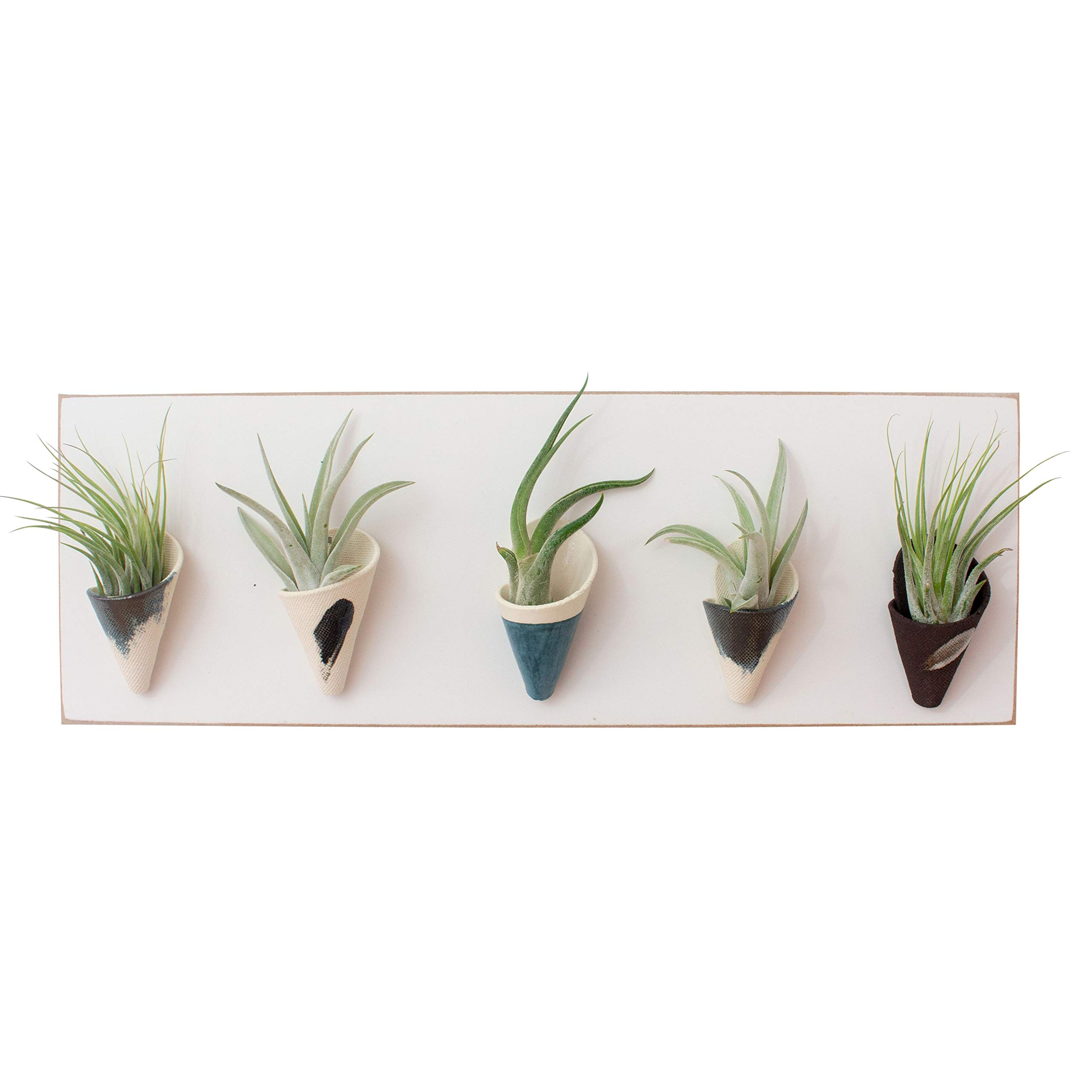 Carter & Rose Ceramic and Wood Wall Planter Horizontal (Air Plant Included, Dusk/White)