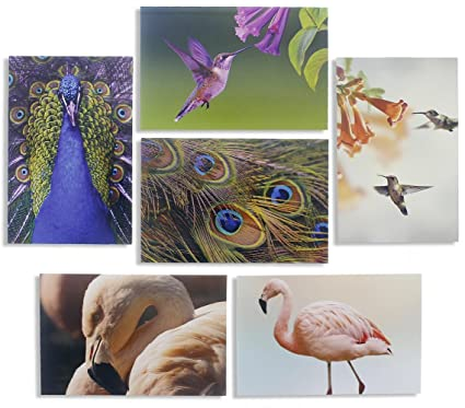 Amazon all occasion bulk greeting cards blank inside bird all occasion bulk greeting cards blank inside bird photographs with peacocks hummingbirds m4hsunfo Gallery