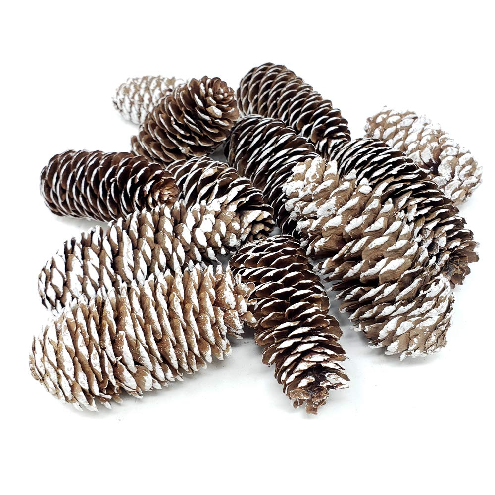 Homeford Decorative Snow Norway Spruce Cones, 3-Inch. 12-Count