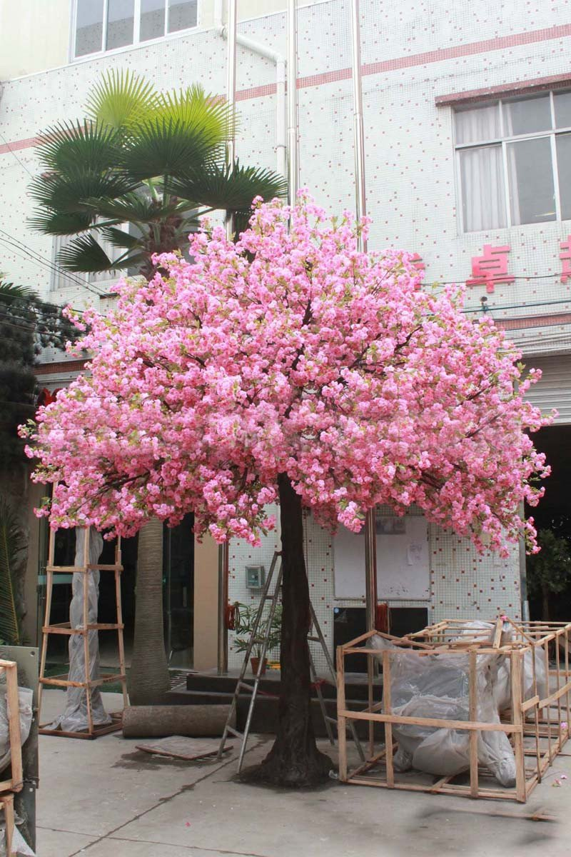 10 Pcs Red Japanese Cherry Blossoms Seeds Courtyard Garden Bonsai Tree Seeds Small Sakura Tree Seeds Mixed Colors SMR