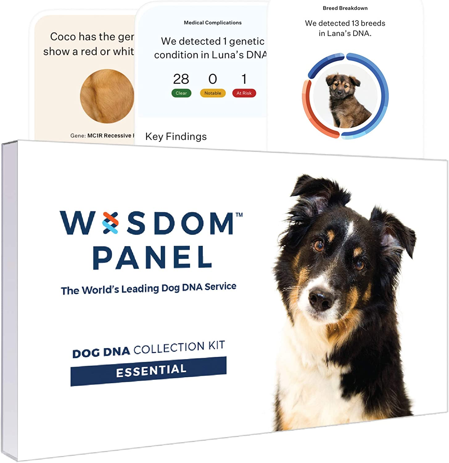 Wisdom Panel Essential Dog DNA Test Kit