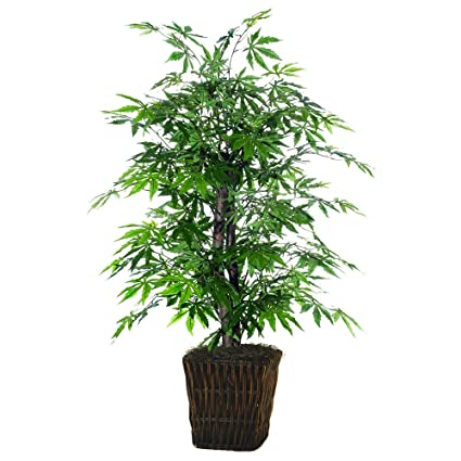Amazoncom Vickerman Tbu1840 0414 Japanese Maple Bush Tree 4