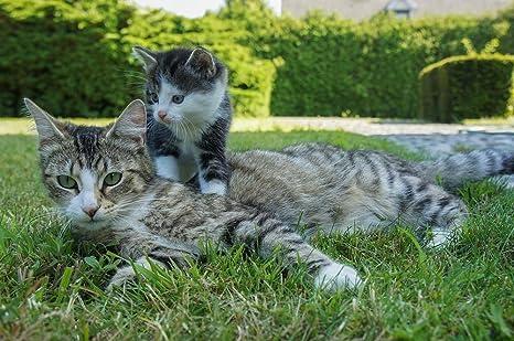 Amazon.com: Laminado 36 x 24 inches Póster: Cat gatito Gatos ...