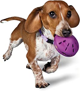 PetSafe Busy Buddy Twist 'n Treat, Treat Dispensing Dog Toy, X-Small, Small, Medium and Large Sizes