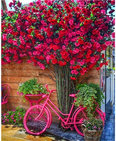 TWYYDP Puzzle para Adultos 500 Muchas Flores Rojas Bicicleta Roja Adecuado para Mayores De 12 Años: Amazon.es: Hogar