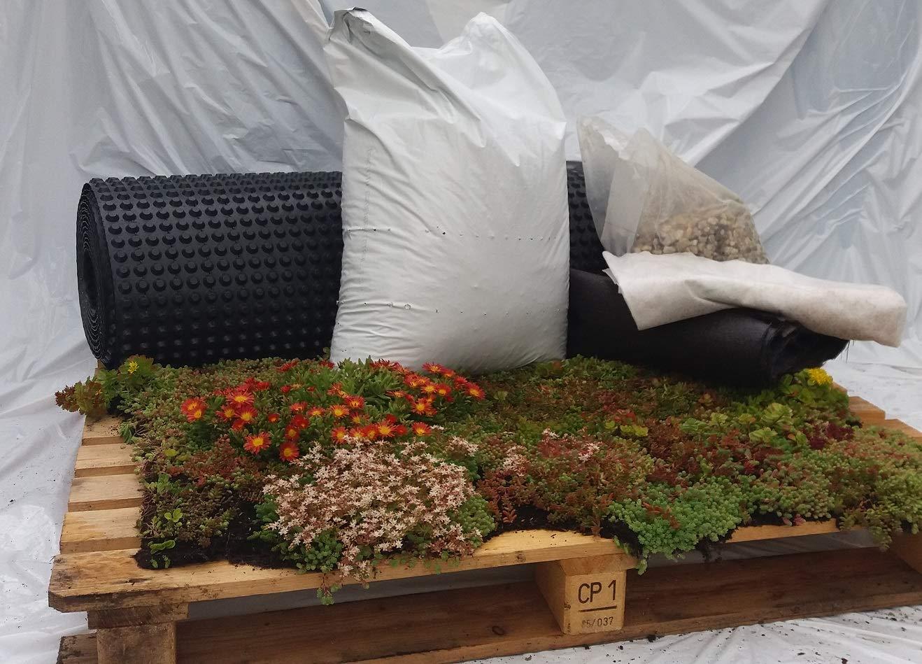 Sedum Kräuter Pflanzenpaket Steinrosenflur für 5 m² Dachbegrünung etc.