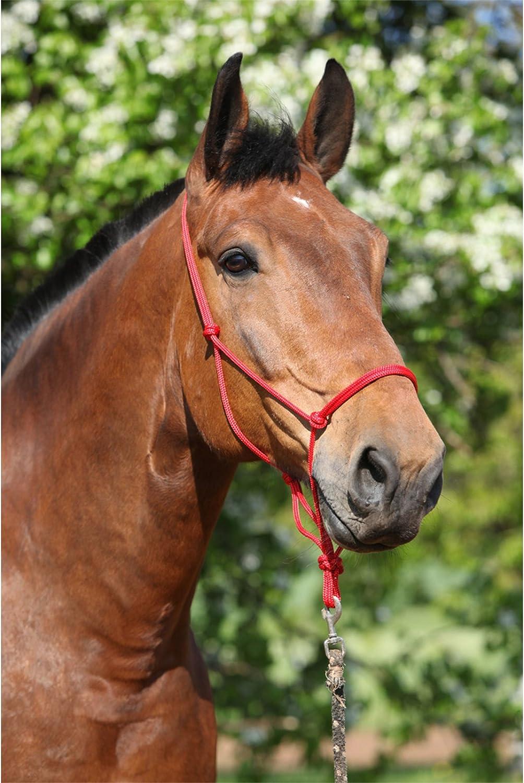 Extra Full /& Draft//Draught Full Horse Pony Shetland Weanling Cob Natural Horsemanship Rope Halters Headcollars For Parelli Training in 11 Sizes Miniature Foal Arab