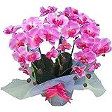 光触媒 枯れない胡蝶蘭 3本立 (造花) ピンク