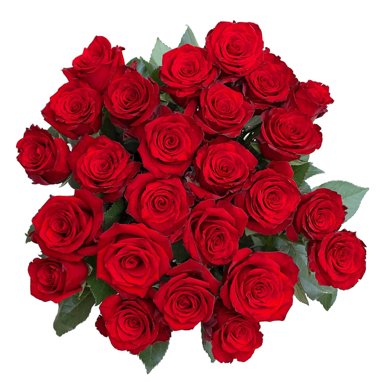 Amazon.com: greenchoice | 24 Fresh Cut de rosas rojas | 27,5 ...