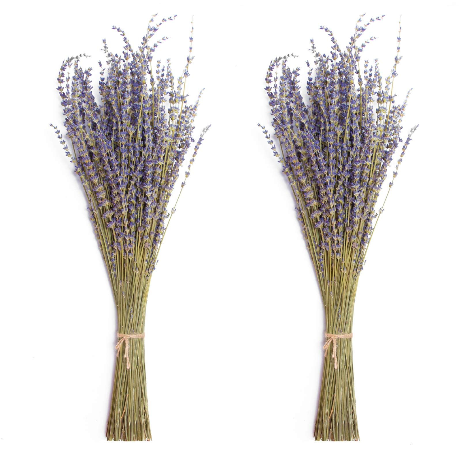 Timoo Dried Lavender Bundles 100% Natural DriedLavenderFlowers for Home Decoration, Photo Props, Home Fragrance, 2 Bundles Pack by Timoo