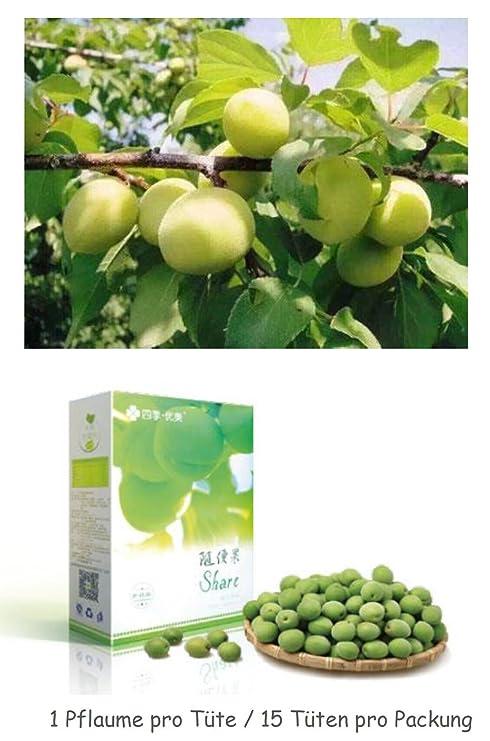 Share ciruela Original Plum TCM tradicionales chinos medicinal bio ...