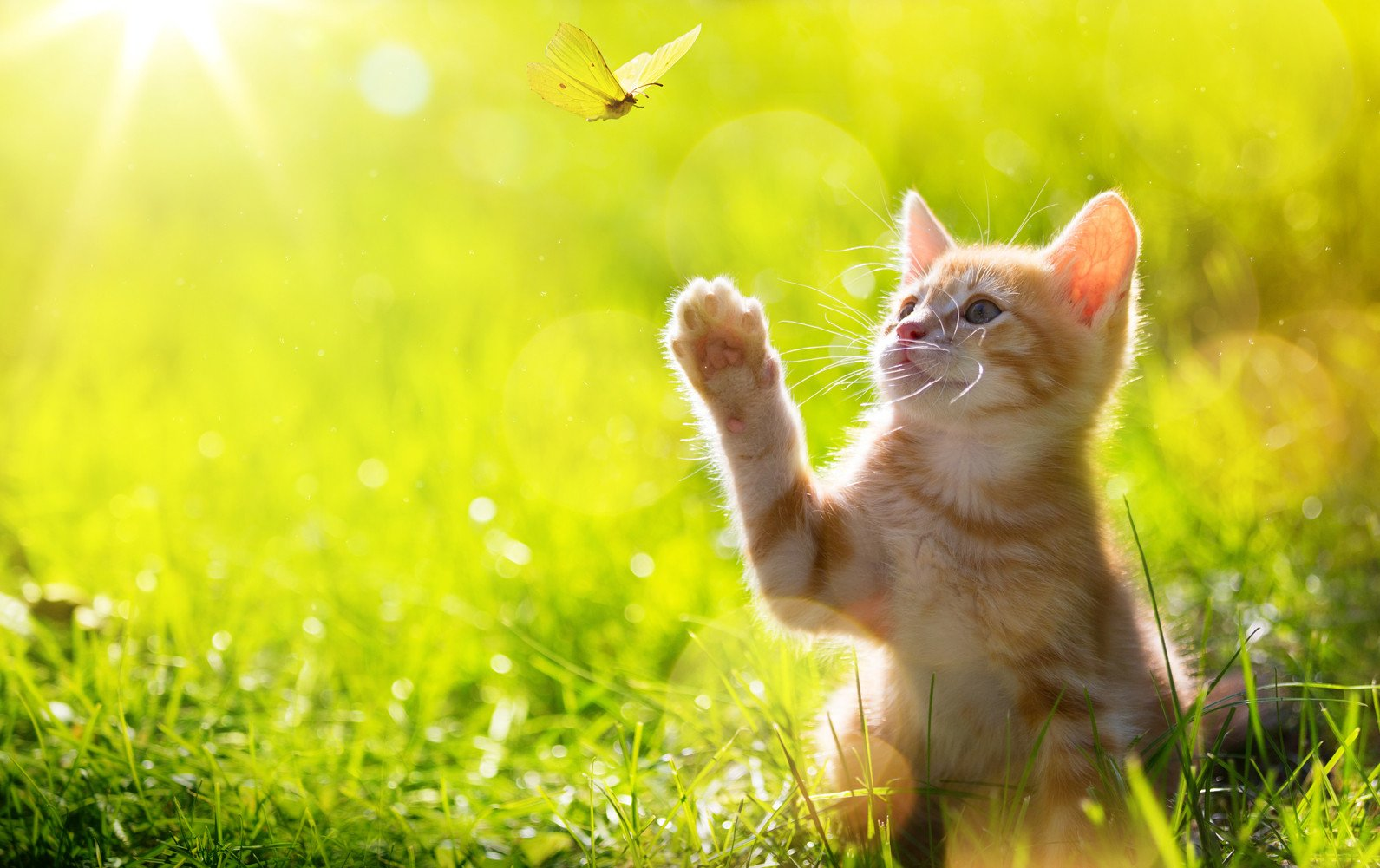 CHOIS Custom Films CF3336 Animal Cat Playing Glass Window Privacy DIY Stickers 3' W by 2' H