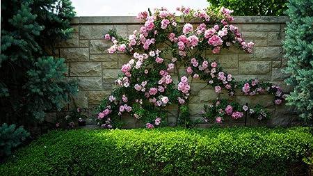 Hcyefg 1000 Pieces De Puzzle Fleurs Jardin Fleuri Flore Rose Passe