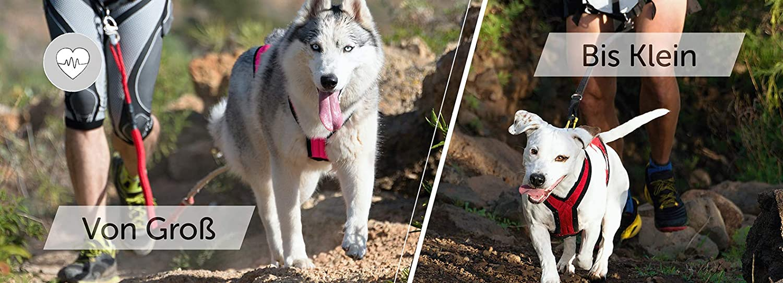 Amazon.com: LasaLine - Arnés de pesas para perro con moto de ...
