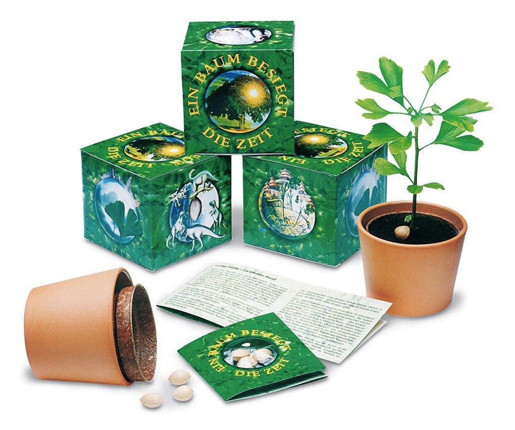 Ginkgobaum - Anzuchtset - Ein Baum besiegt die Zeit FloraPresenta
