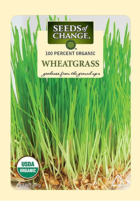 Amazon.com: Semillas del cambio 07744 – Wheatgrass orgánico ...