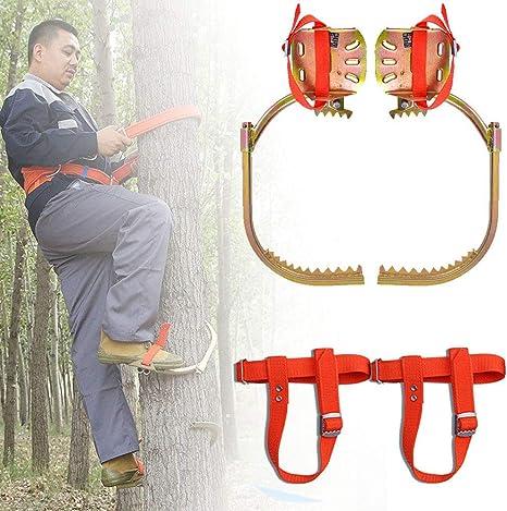 Trepar a los árboles de Spike Conjunto, del árbol que sube ...