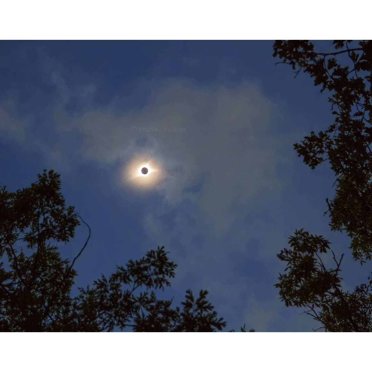 11x14 Solar Eclipse Print ''Through the Trees'' by TravLin Photography