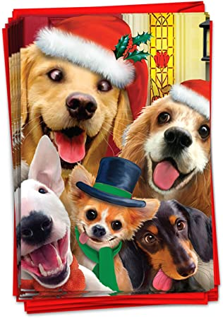 amazon com 12 boxed merry christmas to zoo dogs christmas cards w envelopes 4 63 x 6 75 inch funny puppy holiday notes happy holidays with silly puppies in santa hats christmas greeting cards b6652gxsg 12 boxed merry christmas to zoo dogs christmas cards w envelopes 4 63 x 6 75 inch funny puppy holiday notes happy holidays with silly puppies in