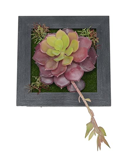 Wall Hangings Fuchsia Artificial Succulents Fake Flowers Art Succulent  Planter In Frame For Living Room Decorations
