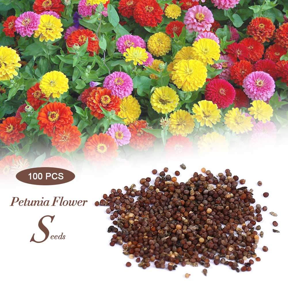 1 Pack Graines De Fleurs De P/étunia Fleurs De P/étales De Jardin En Pot Graines De Bonsa/ï pour La Maison Salon Int/érieur