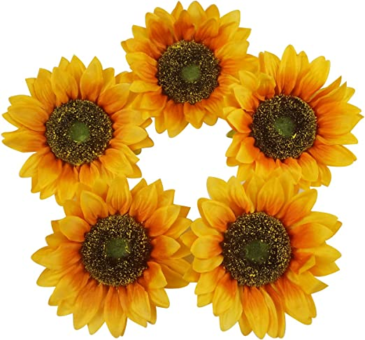 Miniature Sunflower Vine Bright Delights T1139 Outdoor Plant