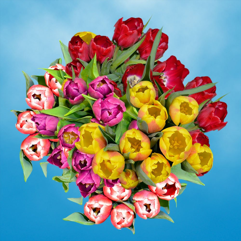 GlobalRose 30 Stems of Assorted Color Tulips Flowers - Fresh Flowers for Delivery
