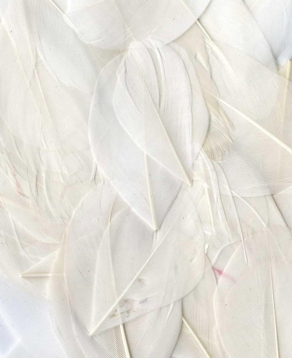 Artemio 3 g Smooth Feathers, White 13030034