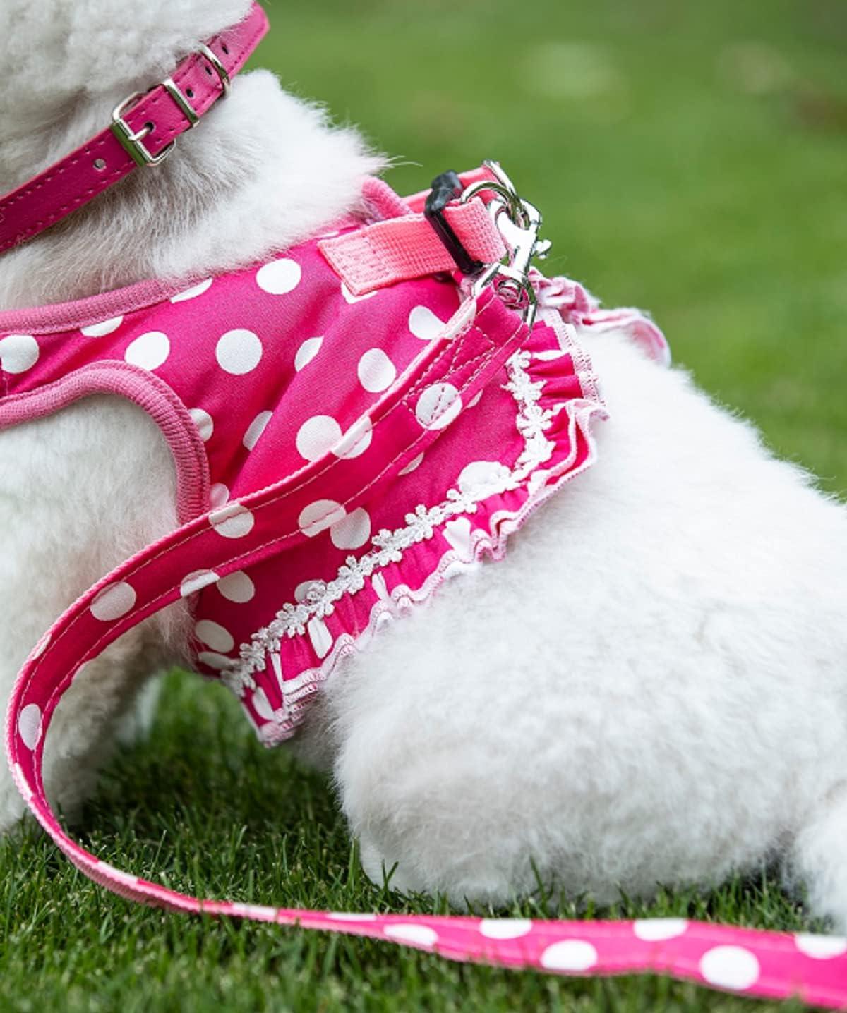 Geschirr-Set f/ür Welpen und Katzen S/ü/ßes kleines Hundegeschirr S, schwarz gepunktetes Hundegeschirr-Set mit pinker Leine und Schleifenhalsband 3-in-1-Weste
