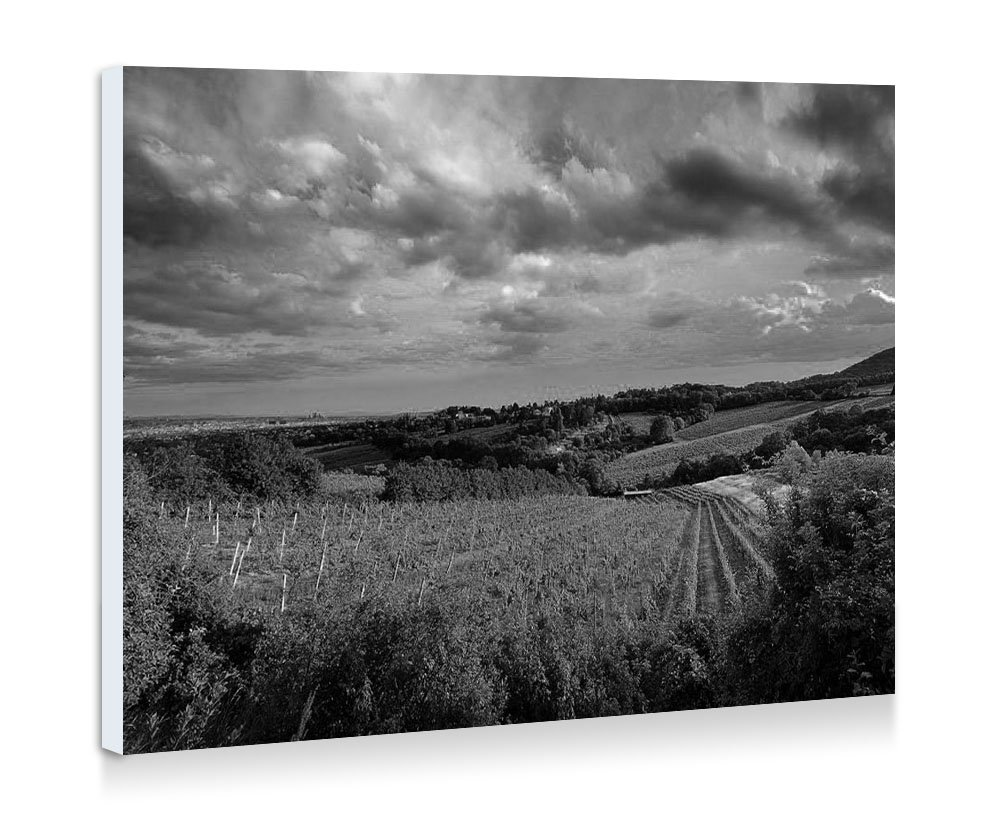 Over the vineyard nature 49704 fine art print wall art pictures stretched for home decoration ready to hang 20x14 inches black and white