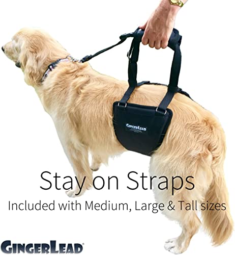 GingerLead-Dog-Support-&-Rehabilitation-Harnesses