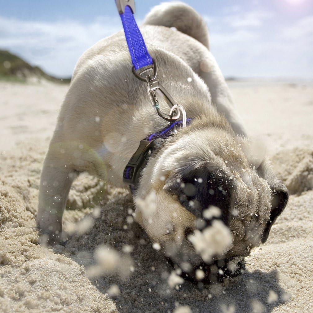 Multifunktional Nylon Elastic Stretch Pet Hundeleine Leine Seil Roll-Pet Hund Puppy Running Seil f/ür Haustier Weste Pet Supplies...