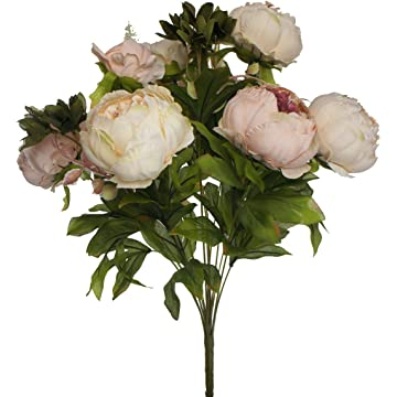 best Lily Garden Peony reviews