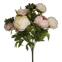 Lily Garden Peony
