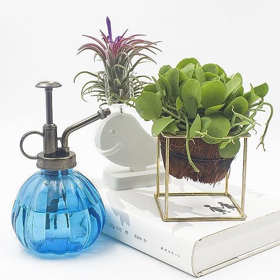 TOVTO - Máster decorativo para plantas y flores, diseño de botella de agua de cristal con bomba superior de 16, 5 cm de alto, azul: Amazon.es: Jardín