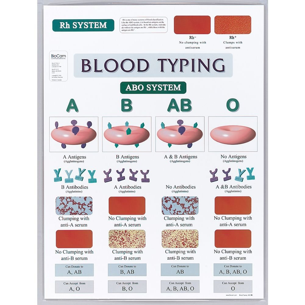 Blood Typing Chart Carolina Biological Supply Company