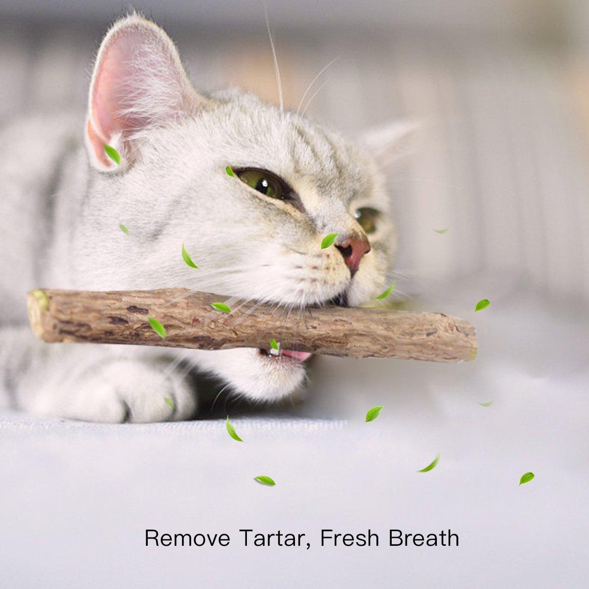 Zoiibuy Catnip Bastone Confezione da 10 Pezzi 10pcs Matatabi Silvervine Giochi al Catnip Cure Dentistiche Naturali e Chew Toy per Datto per Pulizia Dentale per Denti Sani per Tartaro,Alitosi