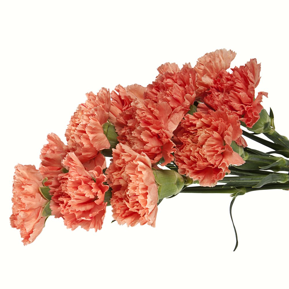 Wholesale Carnations (150 Orange) by BFFlowers.com (Image #2)