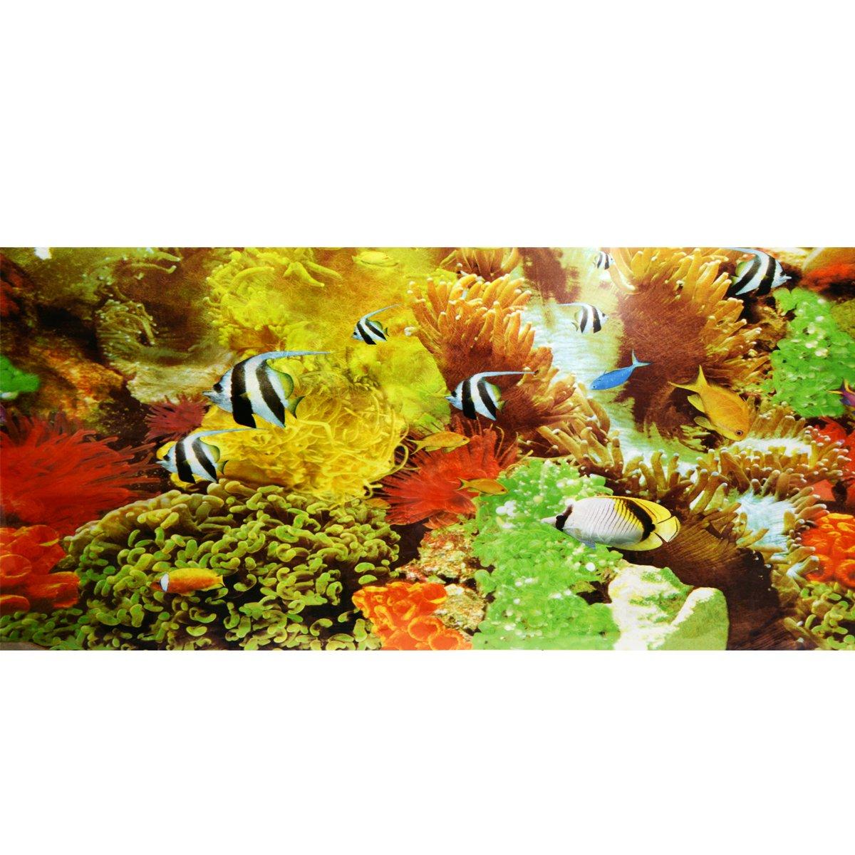 Saim Fond d'aquarium Poster double face Aquarium Fond Océan Mer/corail Fond d'aquarium E4YKSZ09042