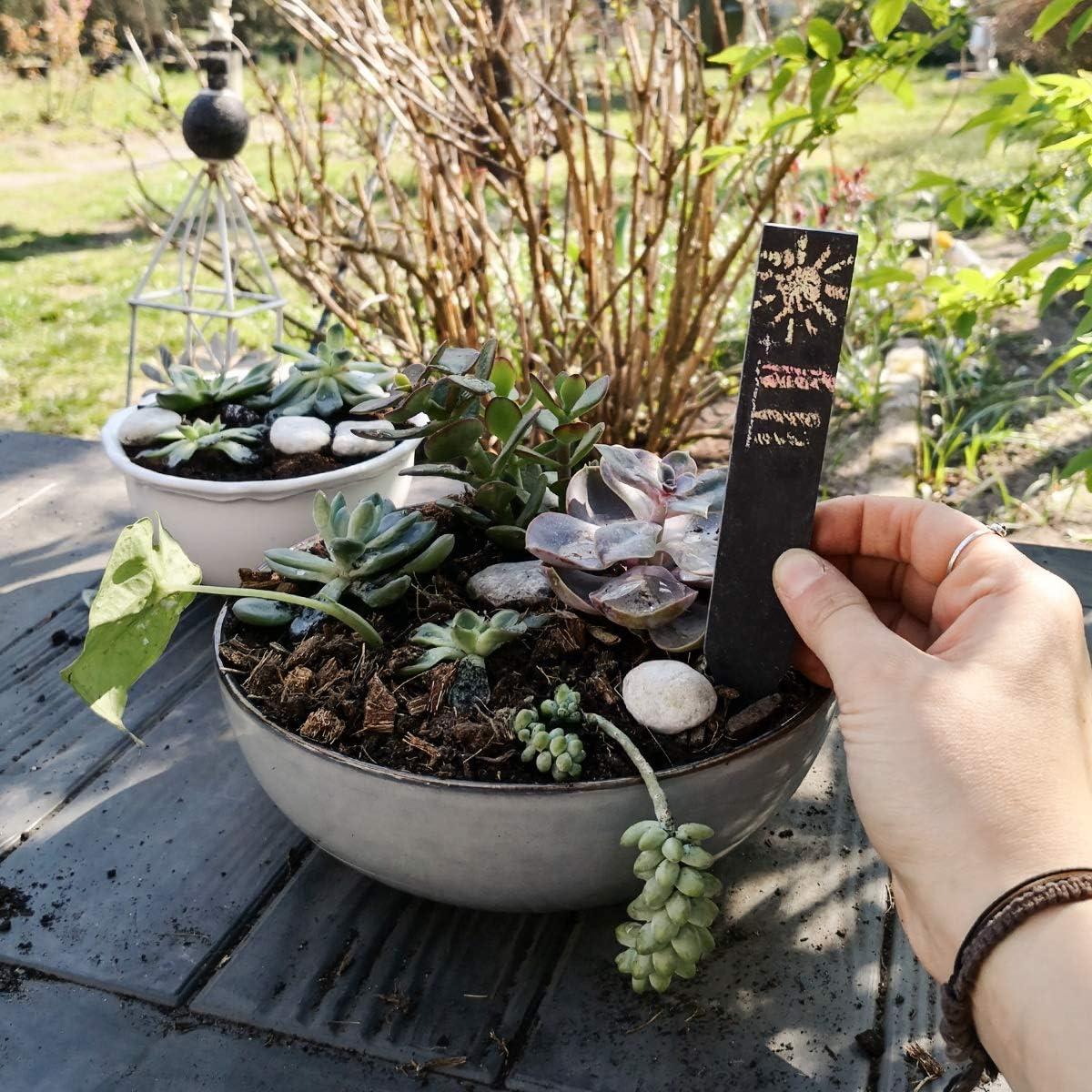 Navaris Set de 10 marcadores para Plantas de Pizarra M - Etiquetas ...