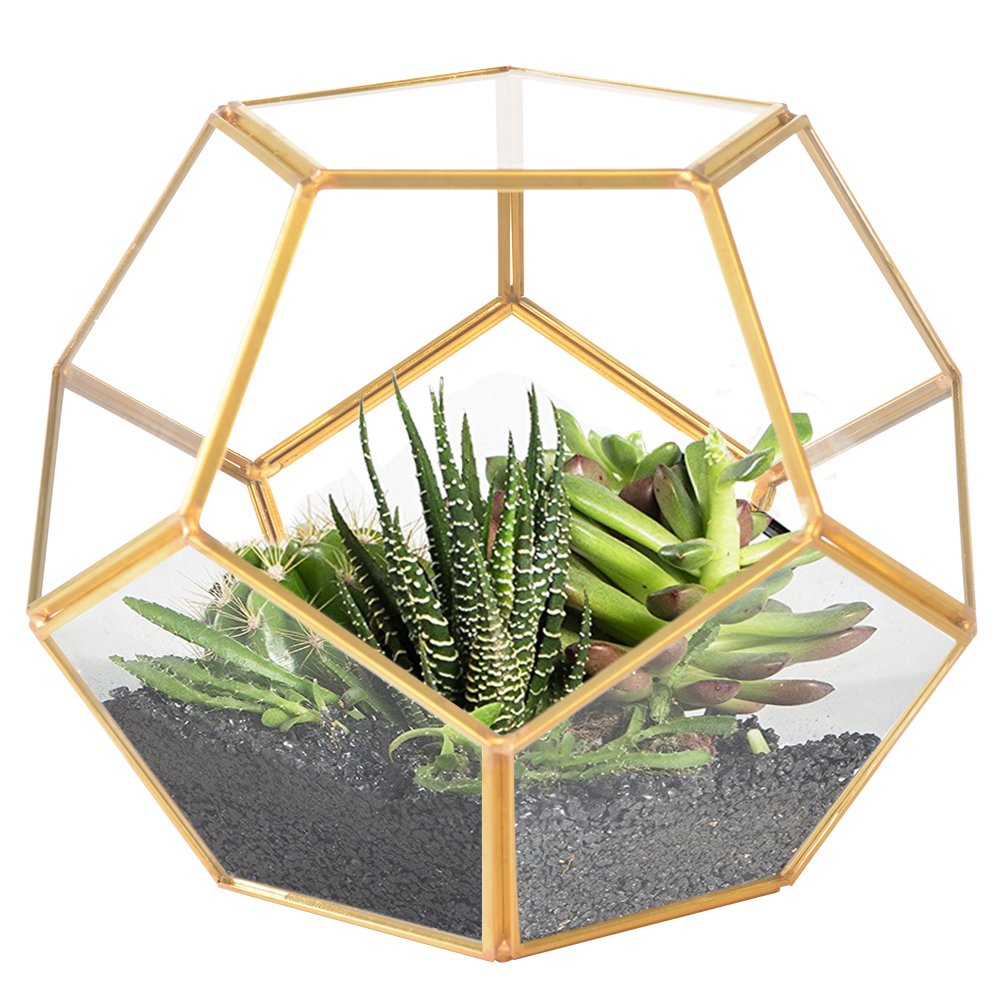 Elitlife Geometric Terrarium, Modern Tabletop Indoor Plant DIY Glass Prism Terrarium Tea Light Candle Holder Display Box for Succulent Fern Moss Air Plants Miniature Fairy Garden (Style D) by Elitlife