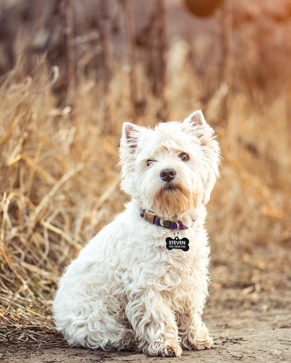 Joytale Medaglietta Cane con Incisione Personalizzata,Osso Targhetta Identificativa Fatto di Acciaio Inox,Adatto per Cani di Taglia Medio Grande Blu