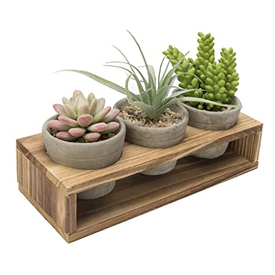 Nattol Succulent Planter, Mini Gray Cement Succulent Planter Pots with Display Wood Stand,Set of 3: Garden & Outdoor