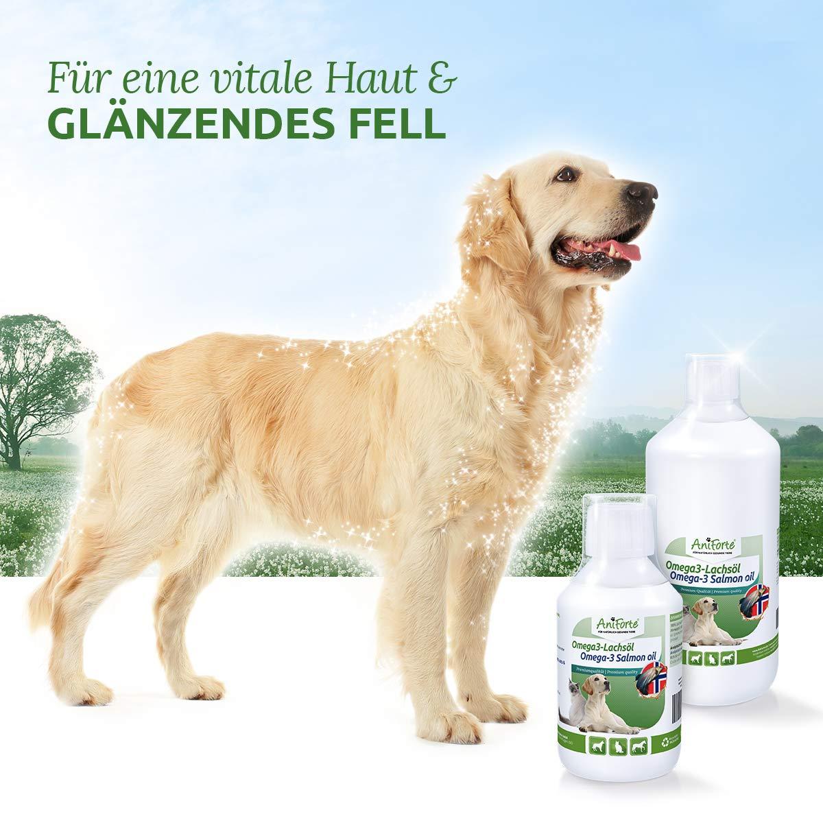 AniForte Aceite de salmón 5 Litros para Perros, Gatos y Caballos, ácidos grasos omega-3, producto puro 100% natural, ideal como complemento alimenticio ...