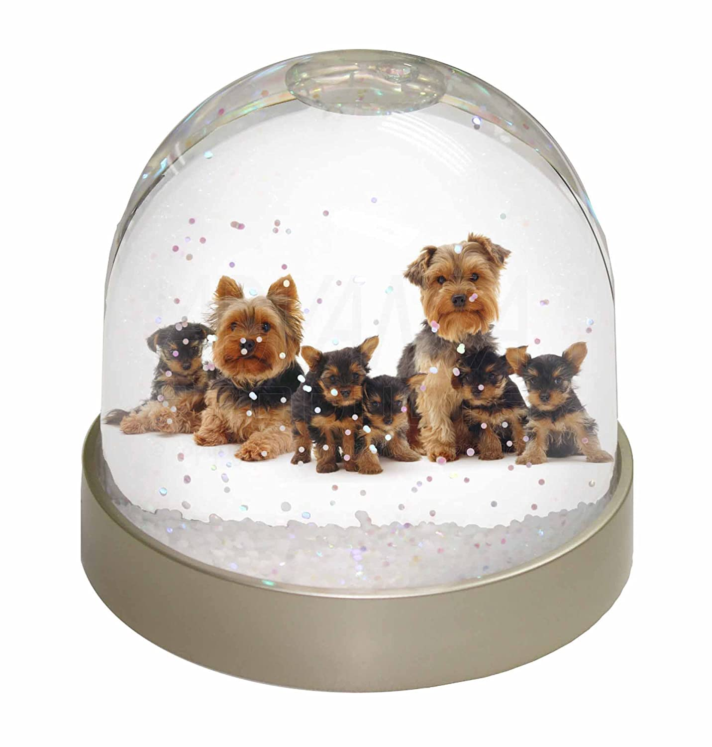 Advanta Yorkshire Terrier Dogs Photo Snow Globe Waterball Stocking Filler Gift, Multi-Colour, 9.2 x 9.2 x 8 cm Advanta Products AD-Y11GL