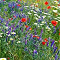 Partial Shade Wild Flower Garden Mix - Mixture of Wildflower Seeds: Purple Coneflower, Baby's Breath, Columbines, Daisys, More