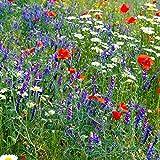 Partial Shade Wild Flower Garden Mix - 4 Oz - Mixture of Wildflower Seeds: Purple Coneflower, Baby's Breath, Columbines, Daisys, More