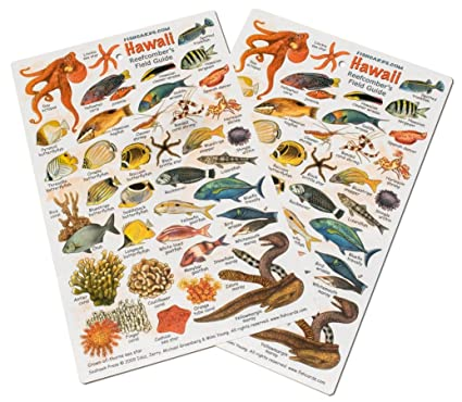 Amazon Fishcardscom Hawaii Reef Fish And Invertebrate ID Set Of